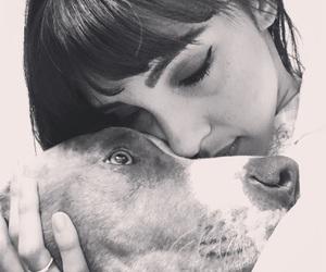 Amora, dog, and pitbull image