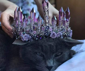 cat, crown, and crystal image