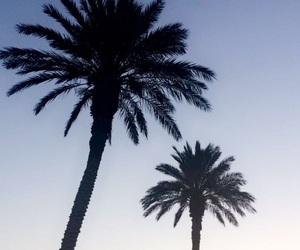 beach, palm tree, and pretty image