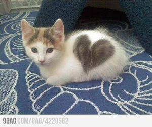 9gag, cat, and heart image
