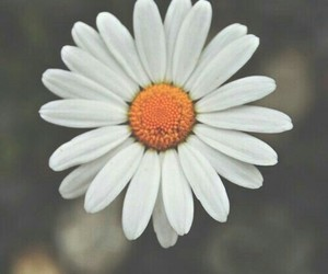 flower and nature image