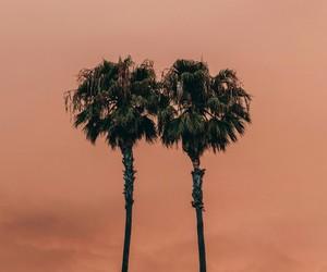 orange, palms, and aesthetic image