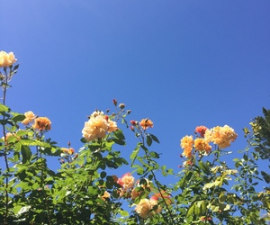 flowers and sky image