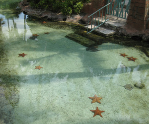 water, starfish, and nature image