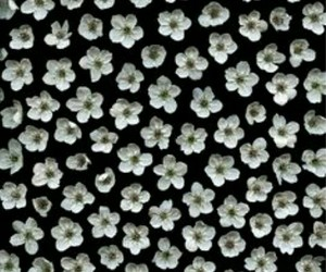 flowers, pattern, and white image