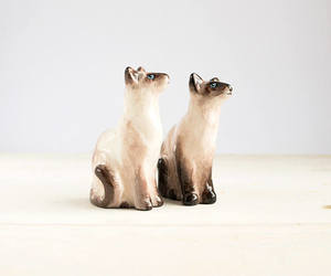 beige, meow, and siamese cats image