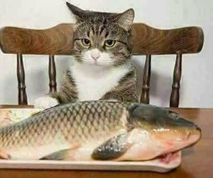 cat, Fisch, and fish image