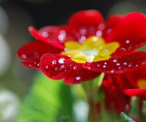 bright, deborah, and flora image