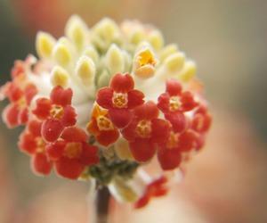 blossom, bokeh, and dof image