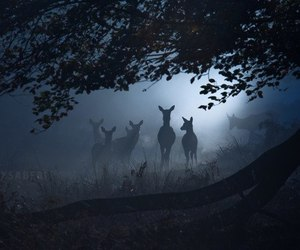 deer, animal, and dark image