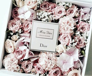 flowers, rose, and dior image