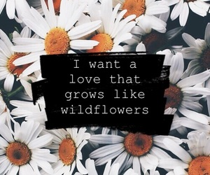 flowers, quotes, and inspiration image