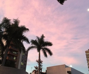 sky, palms, and pink image