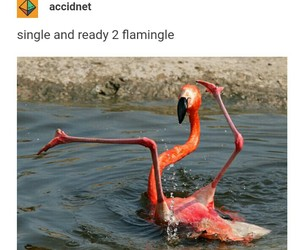funny, single, and flamingo image