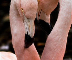 bird, zoo, and flamingos image
