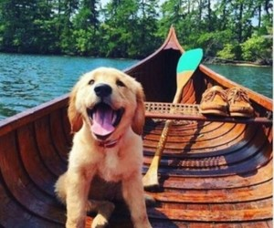 beutiful, dogs, and cute image