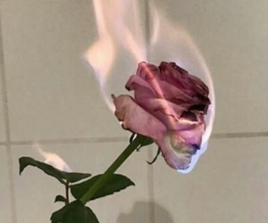 rose, flowers, and fire image