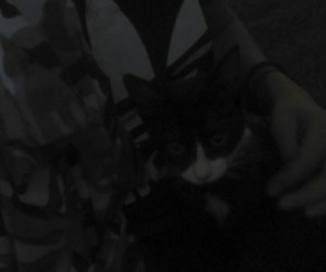 adidas, cat, and me image