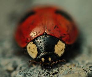 animal, ladybug, and photography image
