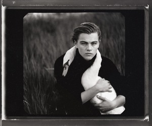 leonardo dicaprio, Swan, and black and white image