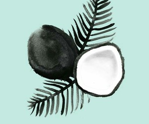 wallpaper, background, and coconut image
