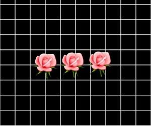 flower, rose, and lockscreen image