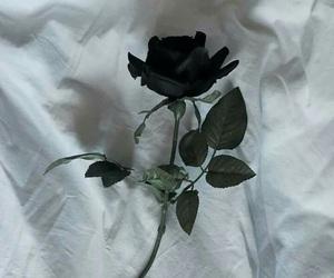 black, flowers, and dark image