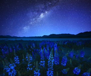 night, flowers, and blue image