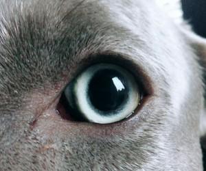 animal, blue, and dog image