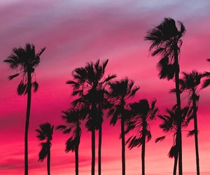 pink, summer, and wallpaper image