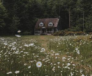 flowers, house, and Dream image