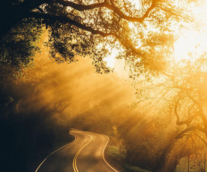 california, Sonoma, and light. image