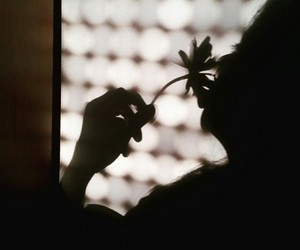 aesthetic, shadow, and flower image