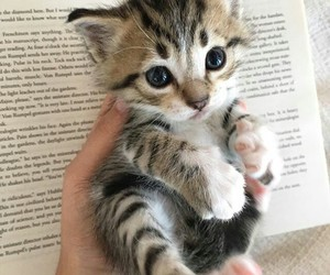 animals, kitten, and book image