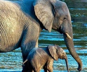 beauty, elephants, and mammals image