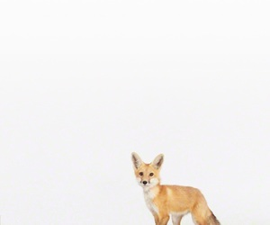 animal, animals, and red fox image