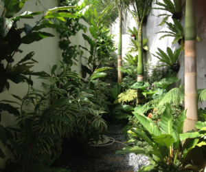 green, plants, and tropical image