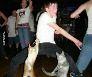 cat, funny, and dance image