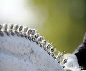 horse, dressage, and love image
