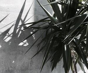 inspo, interior, and plant image