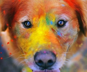 art, colors, and doggie image