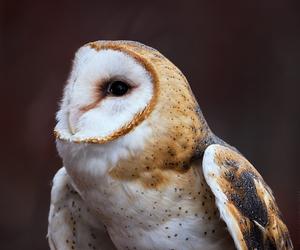 owl image