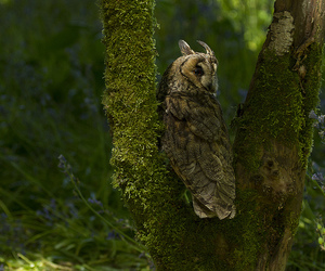 bird, owl, and canon image