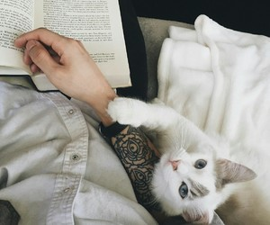 book, cat, and tattoo image