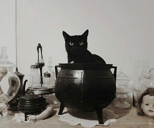 cat, spell, and witch image