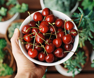 cherry, fruit, and nature image