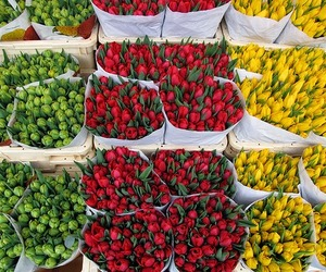amsterdam, beautiful, and flowers image