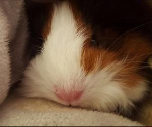 animal, animals, and blanket image