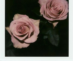 rose, nature, and photo image
