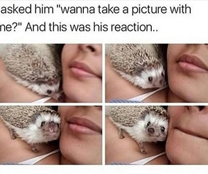 animals, funny, and wins image